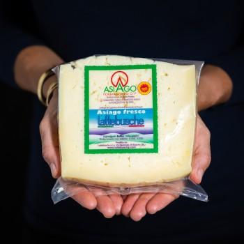 Fresh Asiago Cheese PDO -...